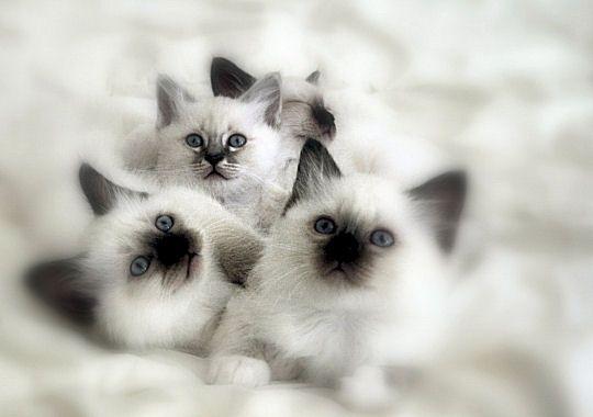 http://kitten.k.i.pic.centerblog.net/5od462t7.jpg