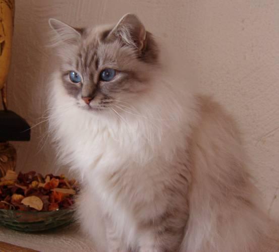 http://kitten.k.i.pic.centerblog.net/85e1qki7.jpg