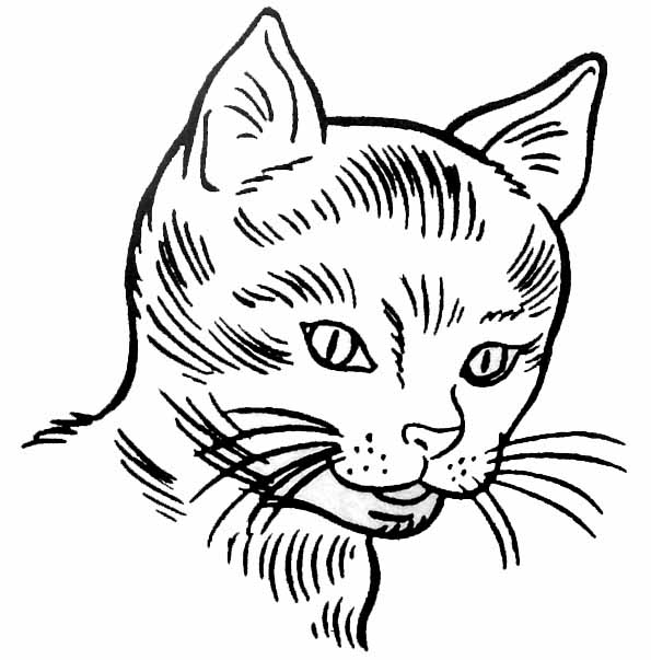 Coloriage chat - Chat facile a dessiner ...