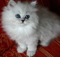 http://kitten.k.i.pic.centerblog.net/aujjfx8v.jpg