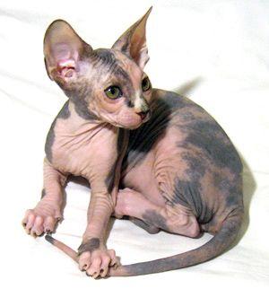 http://kitten.k.i.pic.centerblog.net/cifg9z6u.jpg