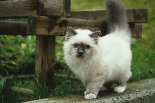 http://kitten.k.i.pic.centerblog.net/h2s44f0s.jpg