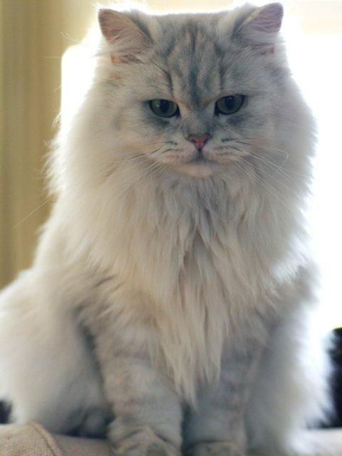 http://kitten.k.i.pic.centerblog.net/pq3bbsu5.jpg
