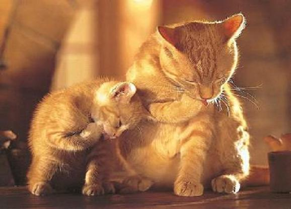 Chaton et sa maman - Images de chats rigolos ...