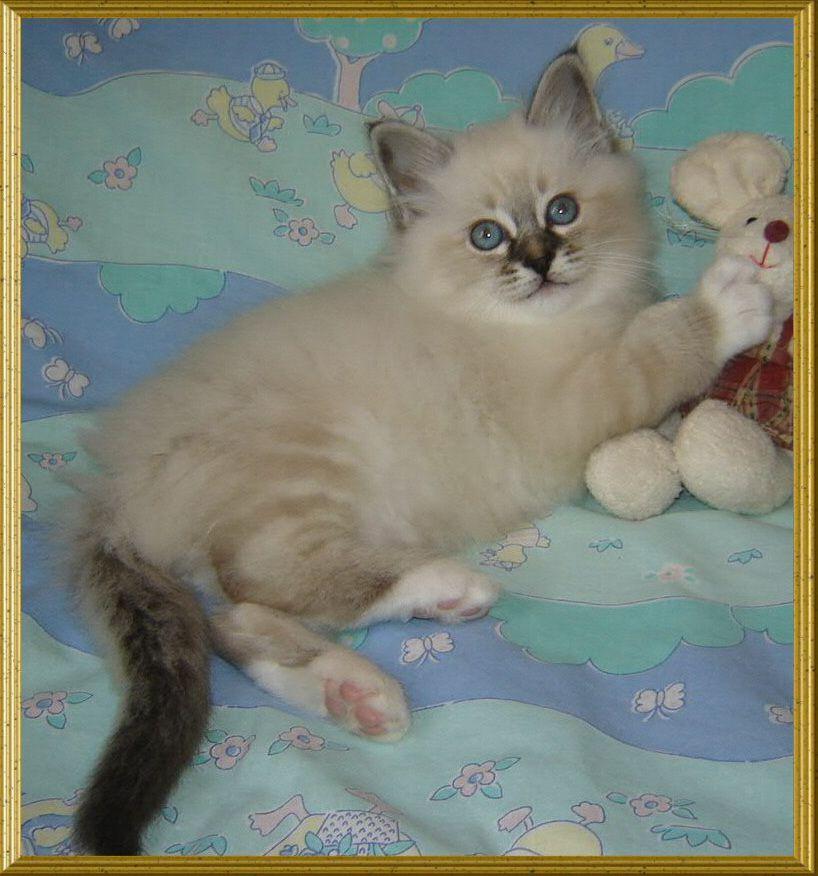 http://kitten.k.i.pic.centerblog.net/shdwne3b.jpg