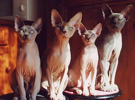 http://kitten.k.i.pic.centerblog.net/voe6i52b.jpg
