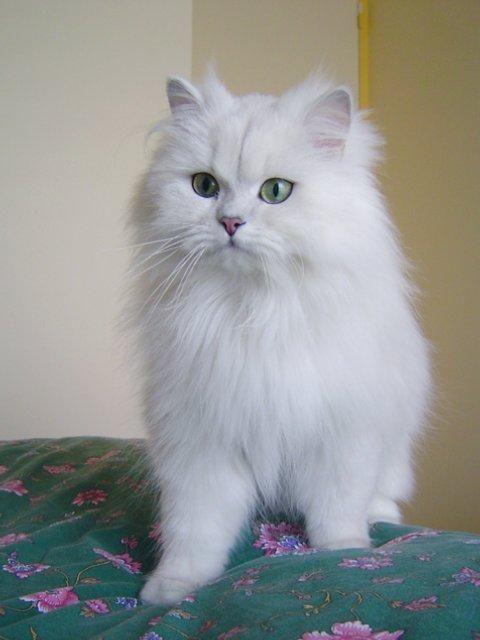 http://kitten.k.i.pic.centerblog.net/yyxw5czm.jpg
