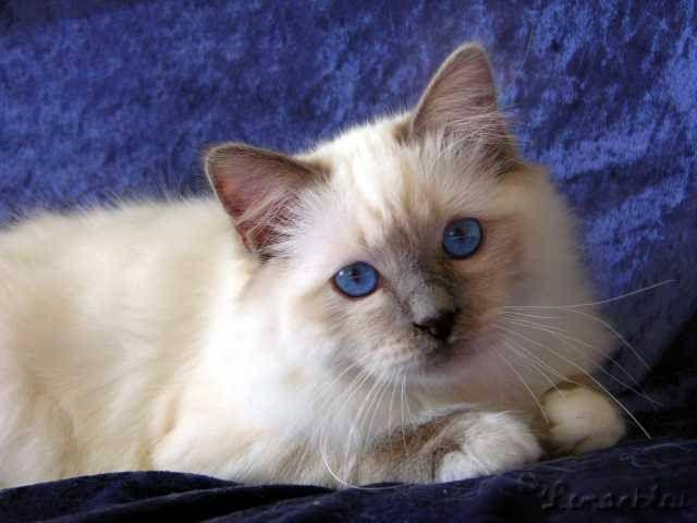 http://kitten.k.i.pic.centerblog.net/zn8zlv3l.jpg